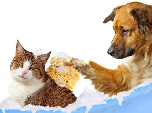 Produkty pielęgnacyjne dla zwierząt